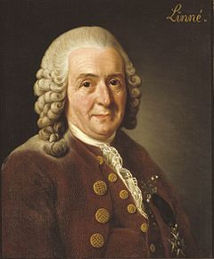 Linnaeus, from wikipedia