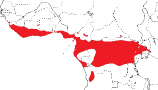 Red-headed Malimbe map