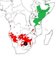 Red-billed Buffalo-Weaver map