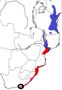 Eastern Golden Weaver map