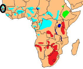 Yellow-crowned Bishop map