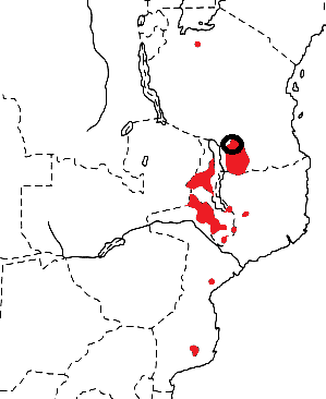 Olive-headed Weaver map